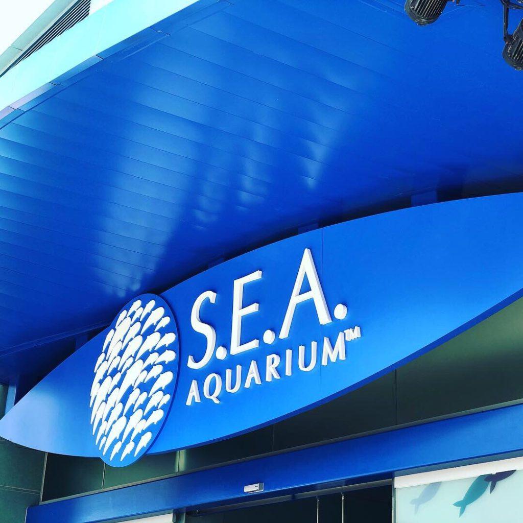 セントーサの水族館で、何やらめちゃんこ癒された話。S.E.A. Aquarium
