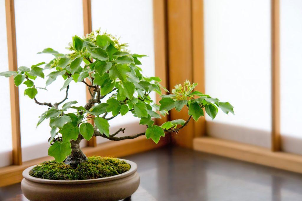 オンラインイベント開催【盆栽はなんで外国人に人気があるの?を知っちゃうイベント】